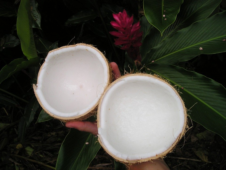 Noce Di Cocco, Natura, Samoa, Esotici, South Sea