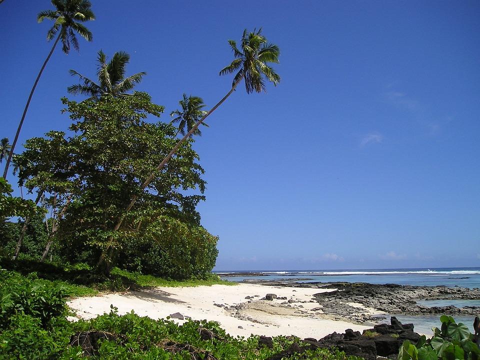 ヤシの木 ビーチ 美しいビーチ ·...