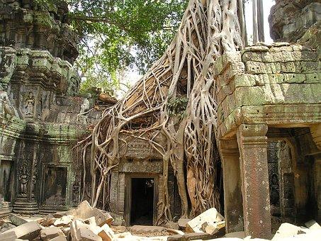 Angkor Wat, Root, Cambodia, Wat