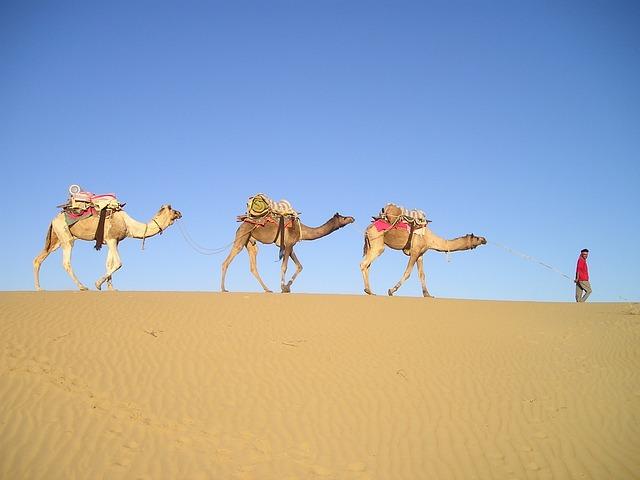 Free Photo India Desert Camels Caravan Free Image On Pixabay 356