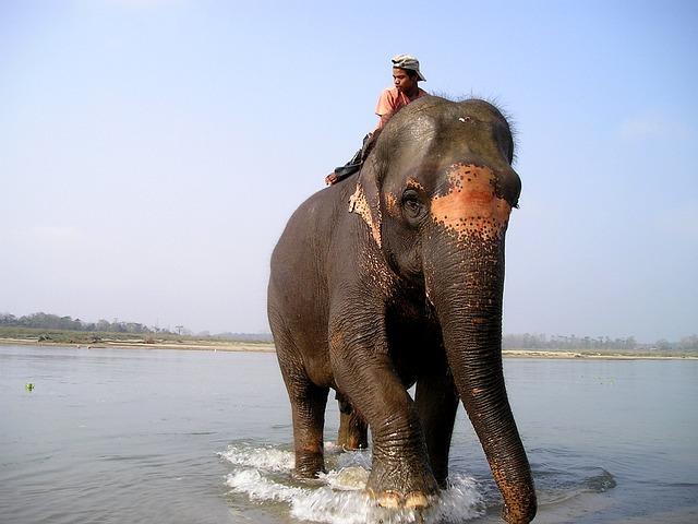 Nepal, Elephant, Elephant Driver