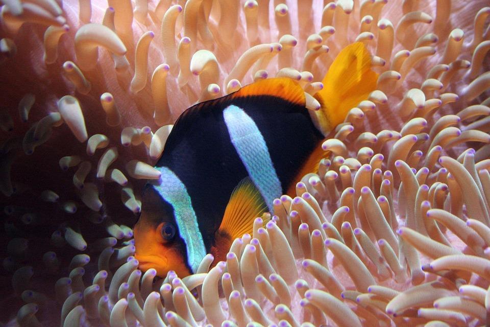 Ketemu Nemo? Dadah aja....