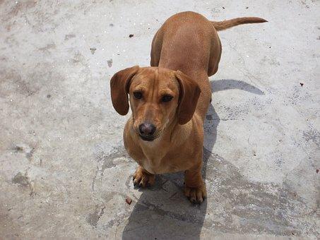 dachshund-1920__340.jpg