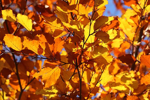 Leaf, Leaves, Yellow, Autumn, Fall