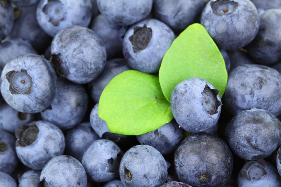 Berry, Blue, Blueberry, Food, Fresh, Fruit, Juicy
