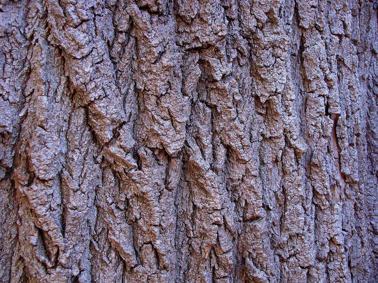 Картинка коры дерева