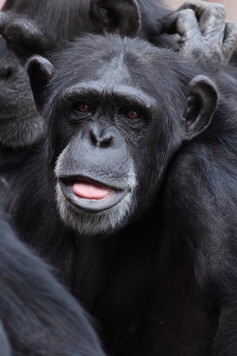 תמונה של קוף חמוד