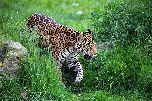 Animal Carnivore Cat · Free photo on Pixabay