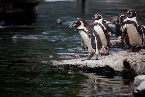 Animal, Animals, Antarctica, Beaks, Bird