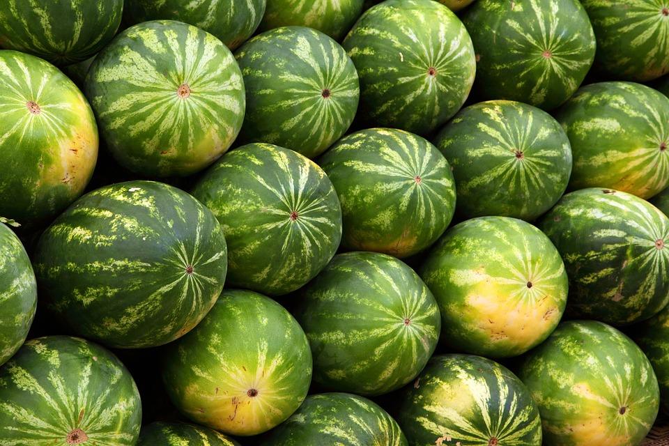 Wassermelonen, Früchte, Produkte, Bio, Ernte, Frisch