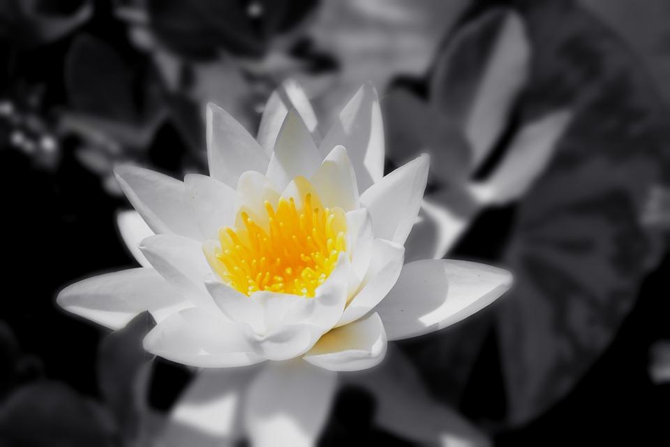 Bunga Hitam Putih Foto Gratis Di Pixabay