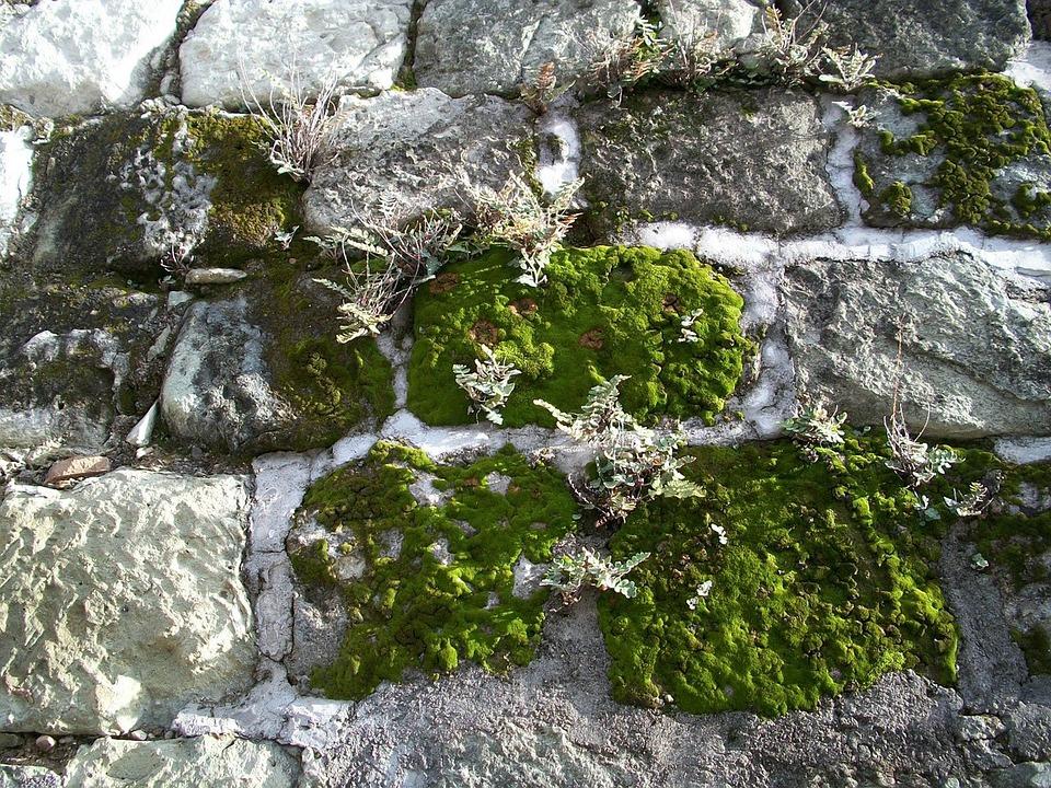 Mousse, Anthocérotes, Hépatiques, Lichen, Mur De Pierre