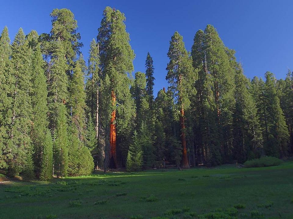 Photo Gratuite S 233 Quoias S 233 Quoia Californie Image