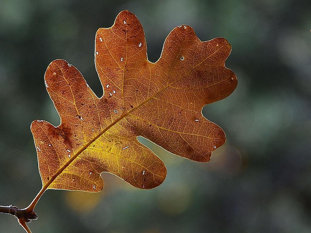 однозначно фото с дубовыми листьями ведущего большой опыт