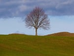tree, individually, nature