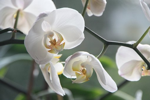 Orchid flower images pixabay download free pictures orchid flower blossom bloom white plant or mightylinksfo