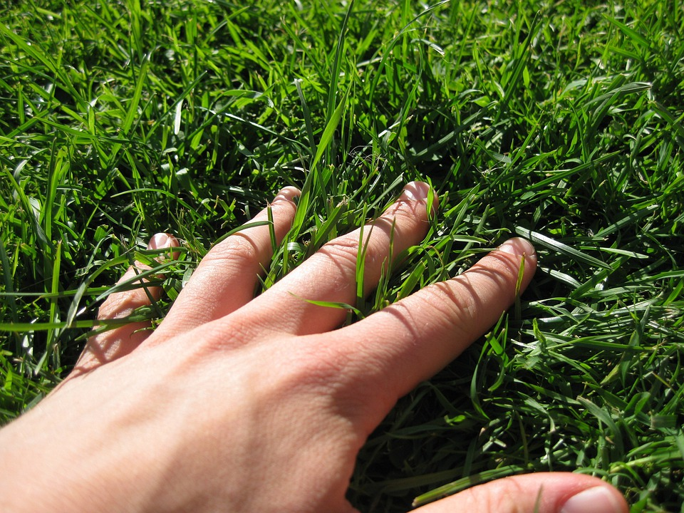 Free photo: Hand, Grass, Finger, Meadow, Green - Free Image on ...
