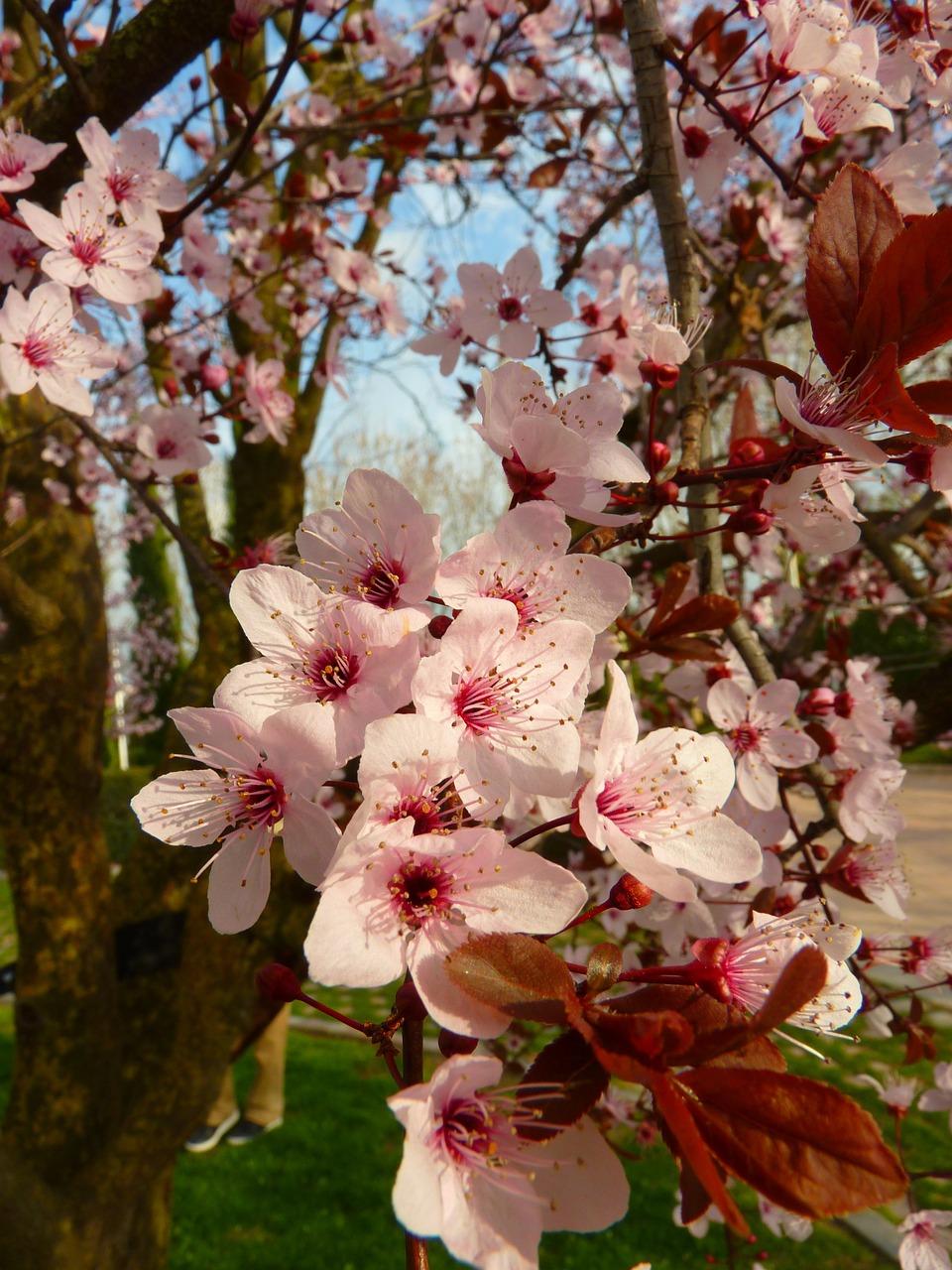 для очень кира алемасова как цветущий миндаль образом, тепло