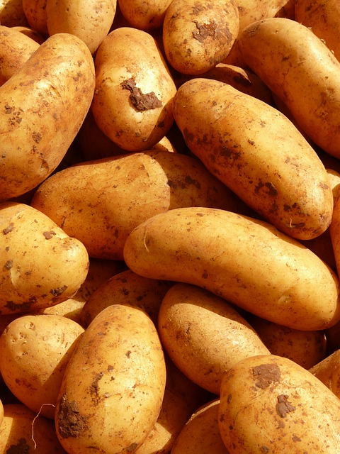 free photo  potatoes  vegetables  potato  food