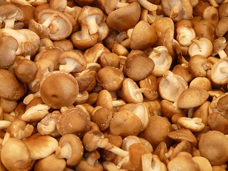 Shiitake, Mushroom, Medicinal Mushrooms