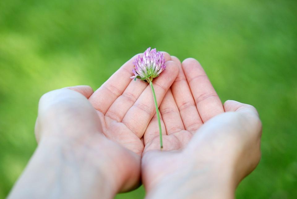 Custodiar la gratuidad