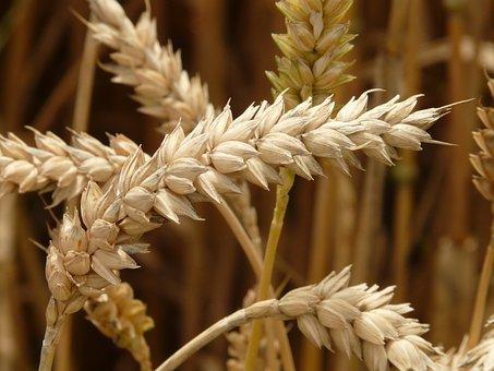 Экспортные цены на пшеницу РФ вернулись к росту на прошлой неделе