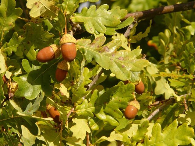 Free photo: Shaft Oak, Pedunculate Oak - Free Image on ...