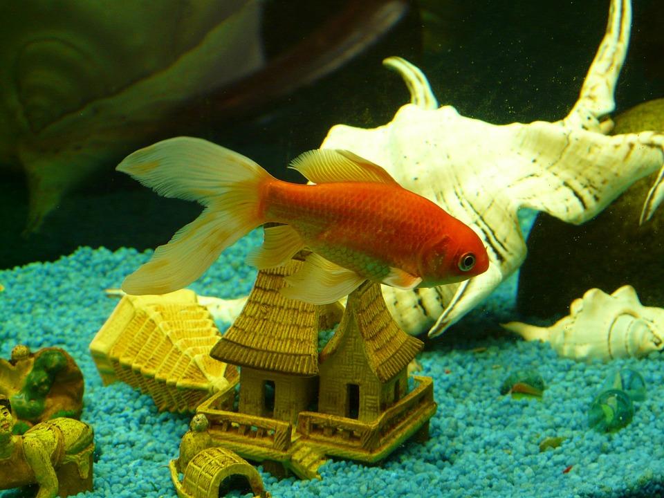 Unduh 81 Gambar Ikan Ikan Terbaru