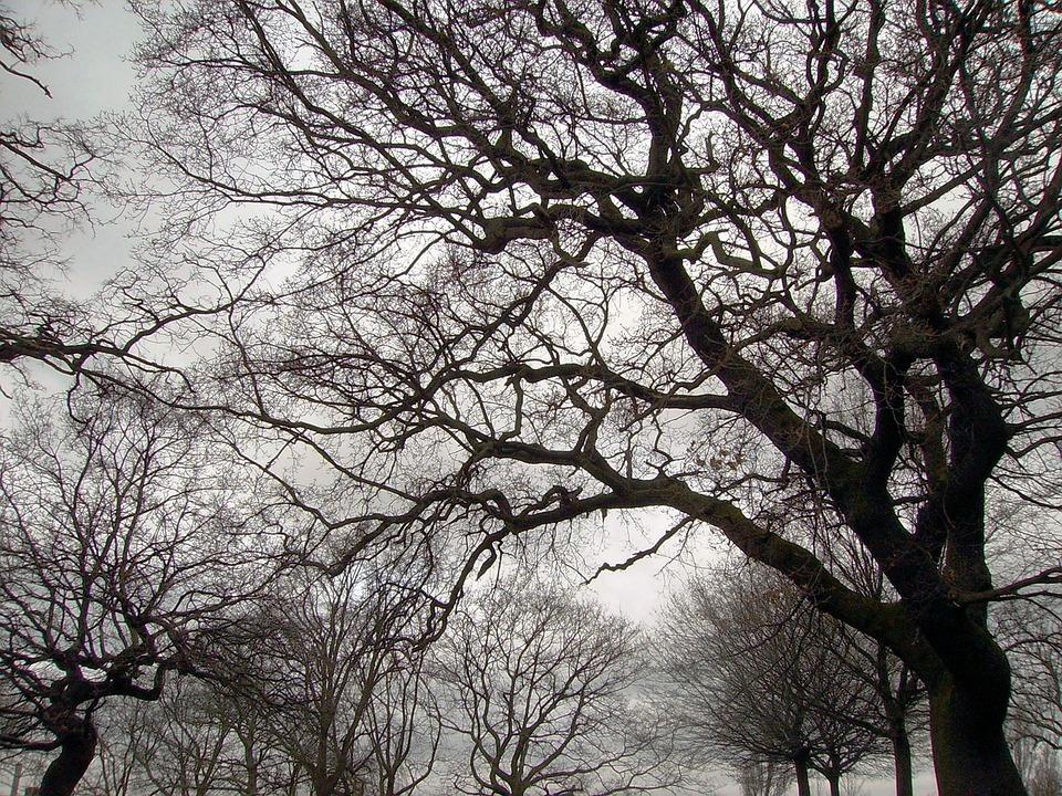 Árboles Naturaleza Paisaje · Foto gratis en Pixabay