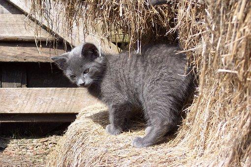 Barn, Kitten, Cat, Feline, Country