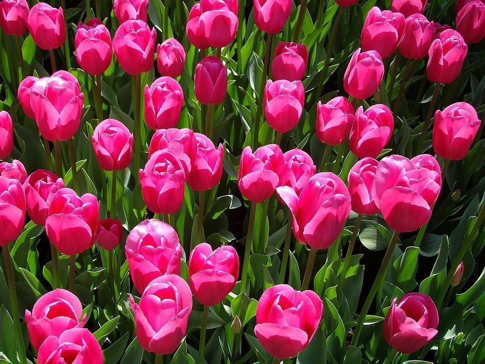 Flora net worth