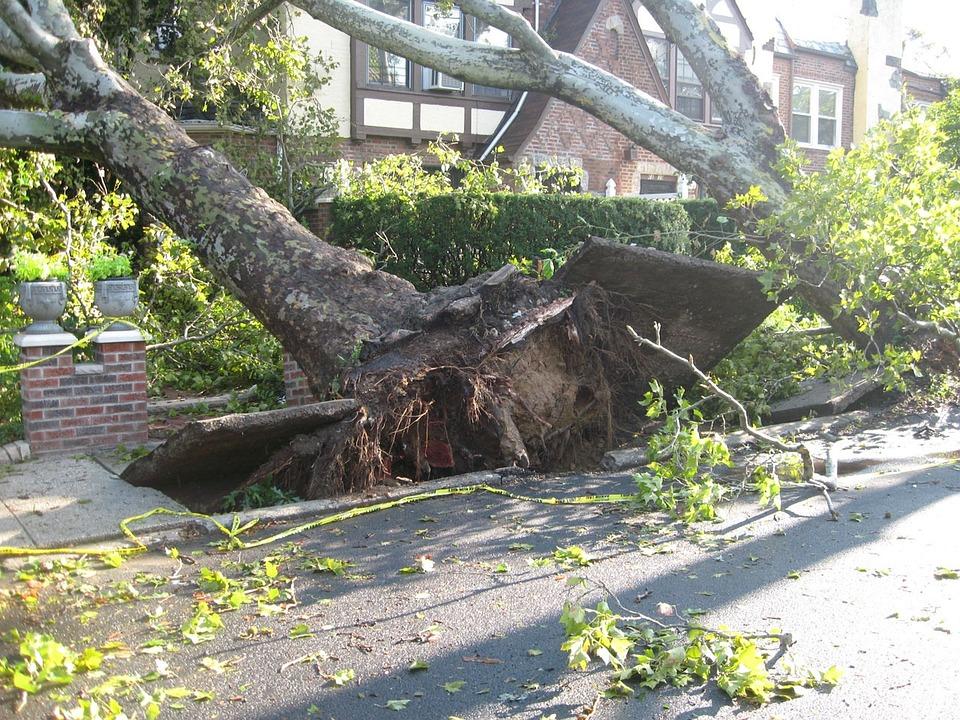 ツリー, 根こそぎ, 竜巻, 風, 損傷, 嵐, 災害, 下落, 天気予報
