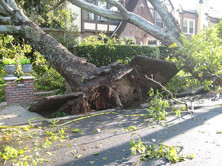 Tree, Uprooted, Tornado, Winds, Damage