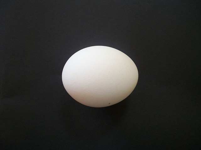 Egg Isolated Chicken 183 Free Photo On Pixabay