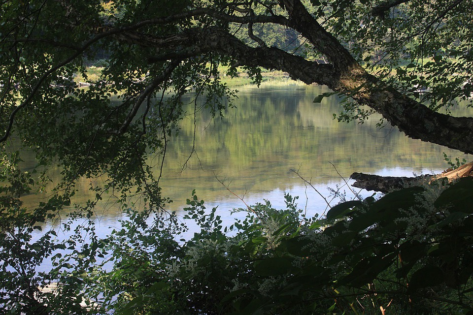 River, Tree, Water, Riverside, Leaves, Nature, Surface