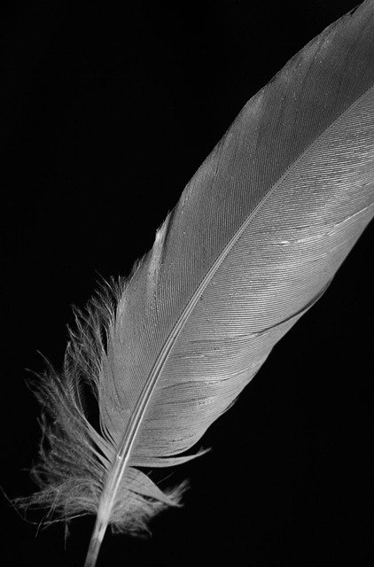 free photo feather  macro  black  white  quill free vector lightning bolt vector light show