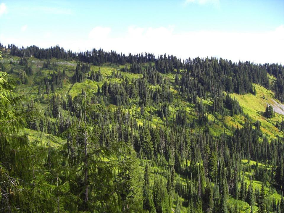 mountains pine trees - photo #26