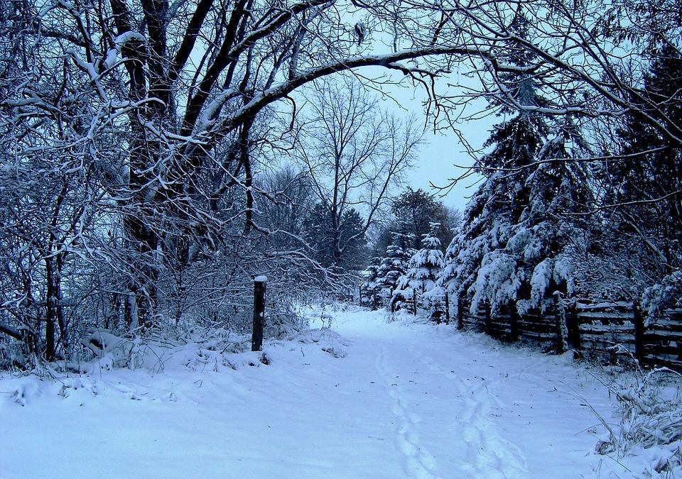 photo gratuite hiver neige arbres vacances image gratuite sur pixabay 14856. Black Bedroom Furniture Sets. Home Design Ideas