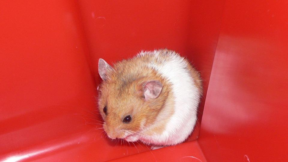 hamsteri putki videot
