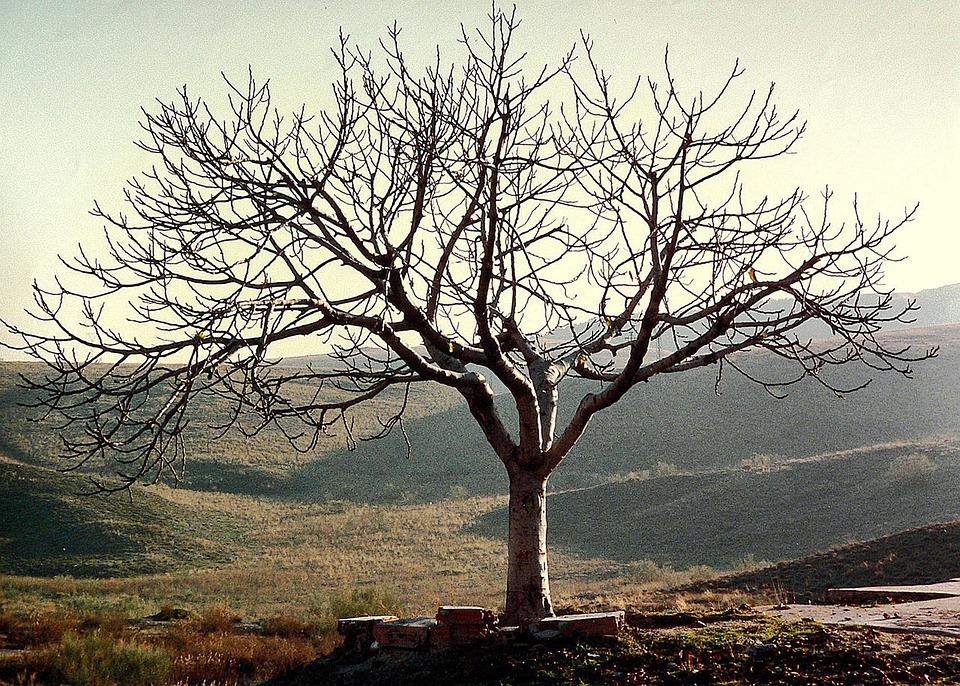 arbre seul sans feuilles nature environnement - Arbre Sans Feuille