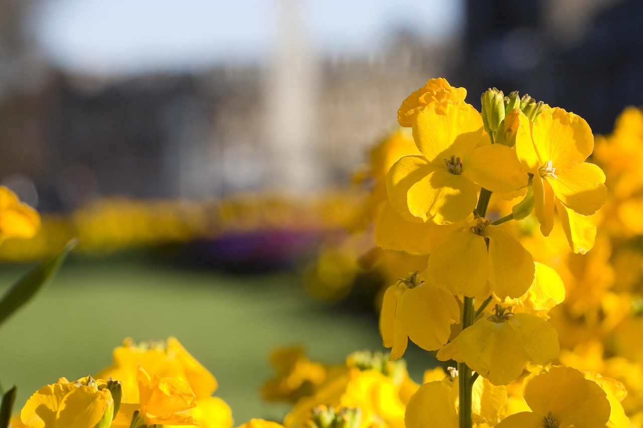 картинки с желтыми цветом обоях могут