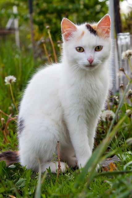 Gambar Bagian Tubuh Hewan Tumbuhan Friskilablog Kucing