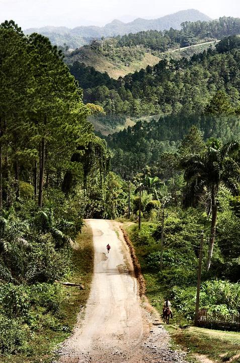 Woud, Weg, Landschap, Natuur, Cuba, Trinidad