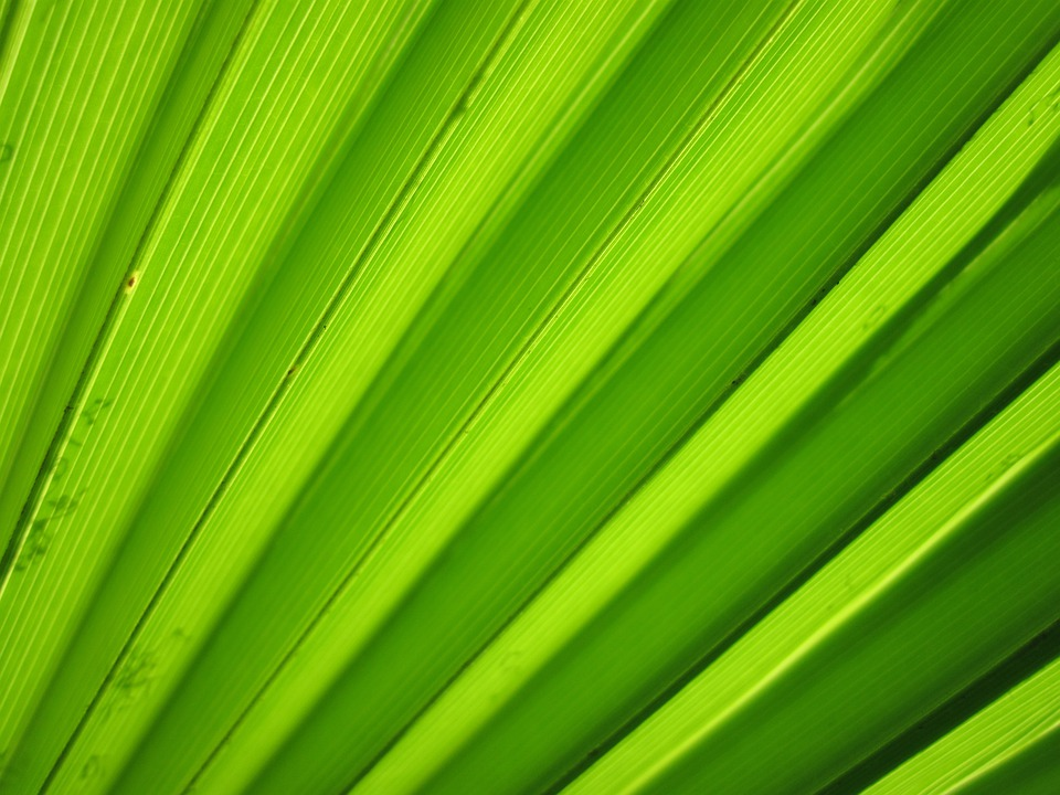 Green, Background - Free images on Pixabay