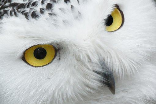 Tier, Schnabel, Schöne, Vogel, Auge