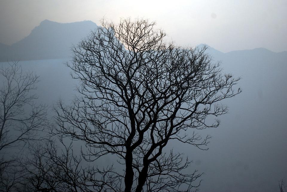 arbre sans feuilles silhouette montagnes paysage - Arbre Sans Feuille