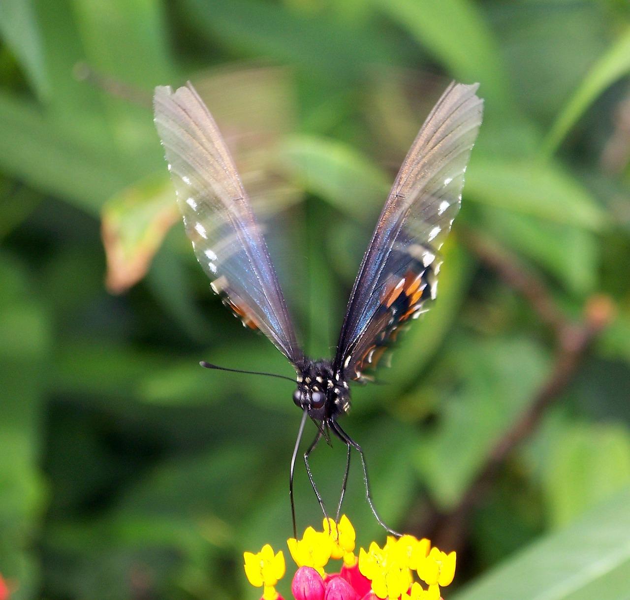 Движущееся картинки бабочек
