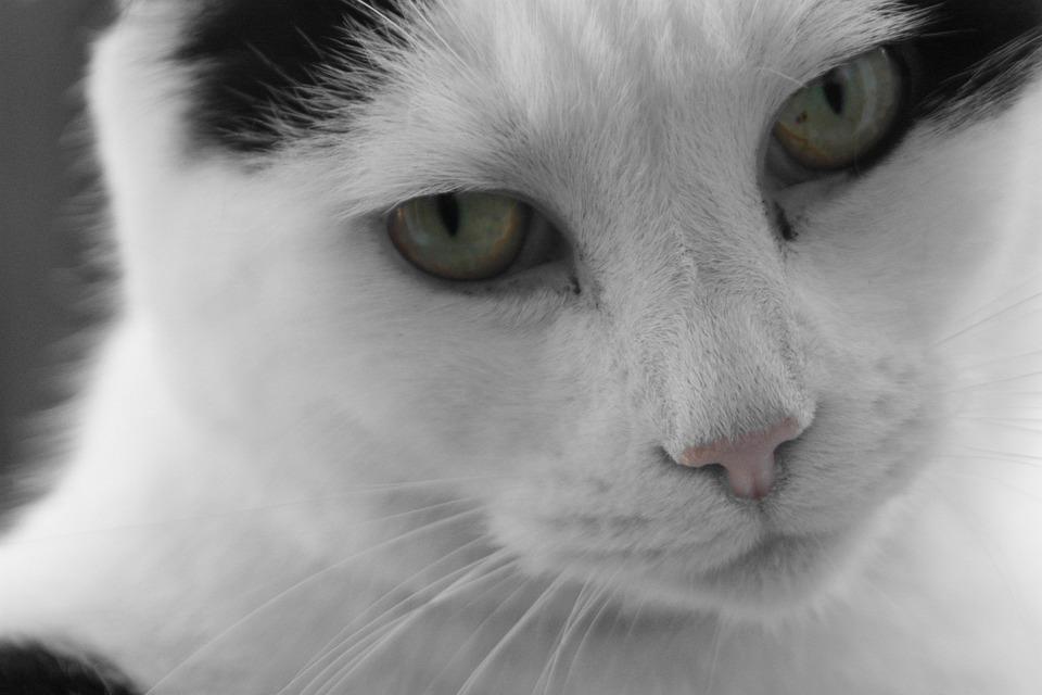 82 Gambar Binatang Peliharaan Hitam Putih Gratis