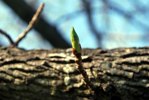 Galho, Bloom, Crescer, Árvore, Primavera