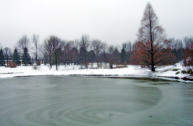 Free Photo Frozen Pond Park Ice Winter Free Image
